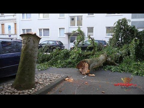 Riesen Baum kracht auf Auto