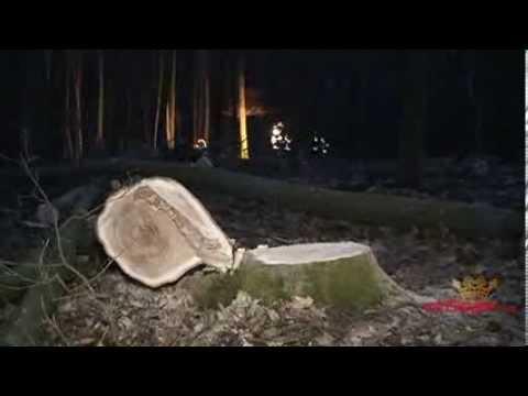Waldarbeiter beim Baumfällen tödlich verunglückt