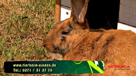 2015-07-09_Siegen_Tier zu Dir - Kaninchen Eric_Foto_Hercher