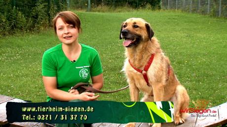 2015-07-09_Siegen_Tierheim_Hund Rex_Foto_Hercher