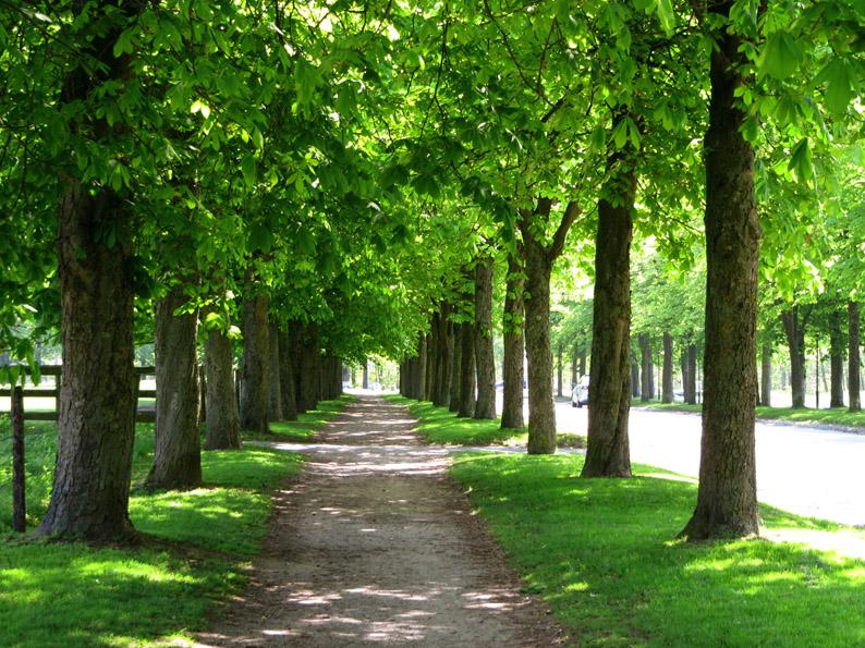 """Schattenspendende Zierden:  Kastanien sind """"Charakterbaum städtischer Grünanlagen"""". Die Flachwurzler können bis zu 300 Jahre alt werden.  (Foto: Rainer Sturm/pixelio.de)"""