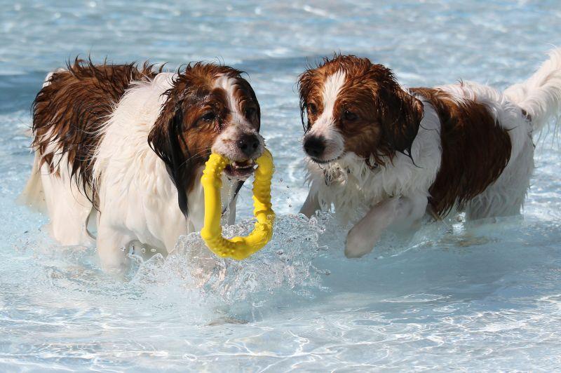 Hundespaß im Rothaarbad (Foto: Stadt Bad Berleburg)