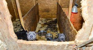 Völlig verdreckt waren die Boxen, in denen die Hunde untergebracht waren. (Foto: Polizei)